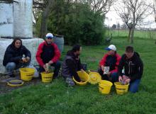 Preparazione della pastura